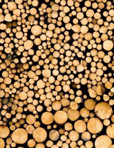 Logs-SHS-231x300
