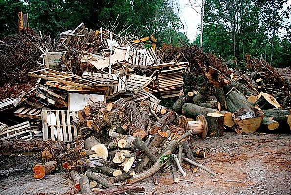 Urban-biomass